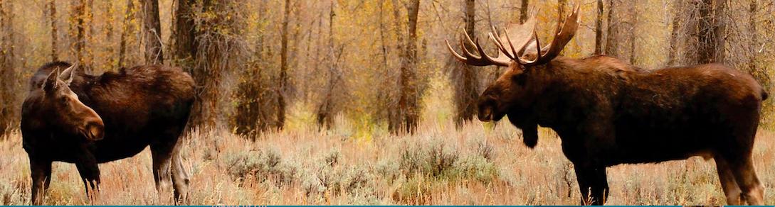 En forêt publique, les installations de chasse doivent être temporaires