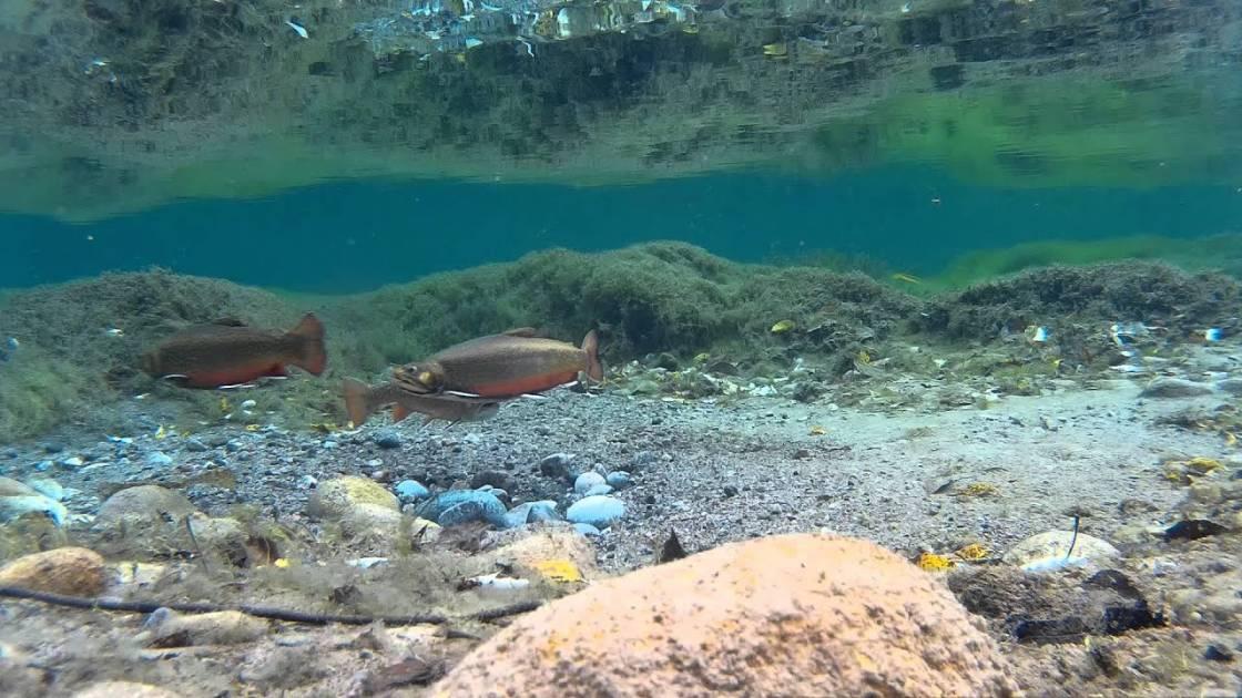 Modification au Règlement de pêche dans un tronçon de la rivière à Mars