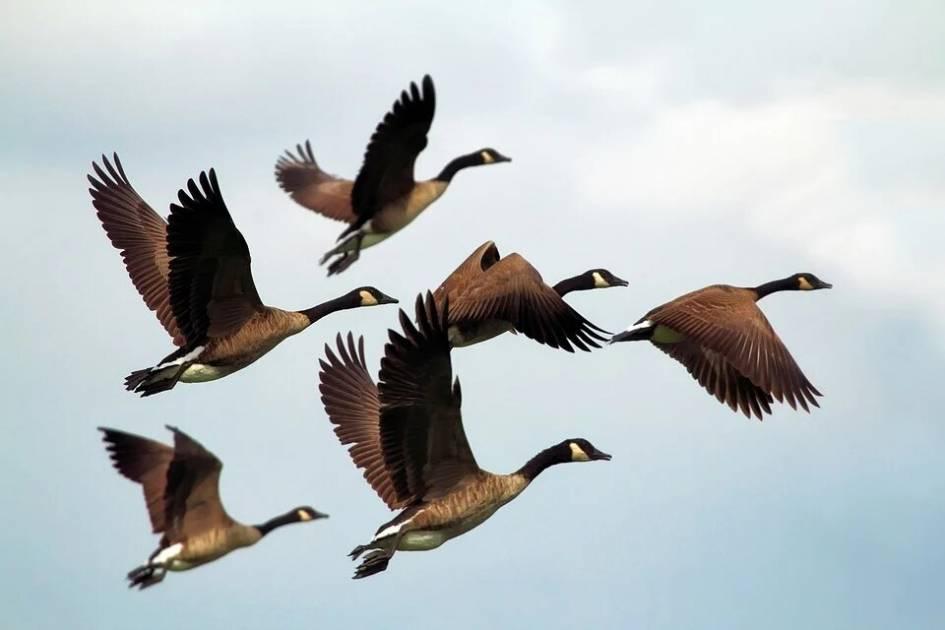 225 000 $ pour la conservation et la mise en valeur des habitats fauniques