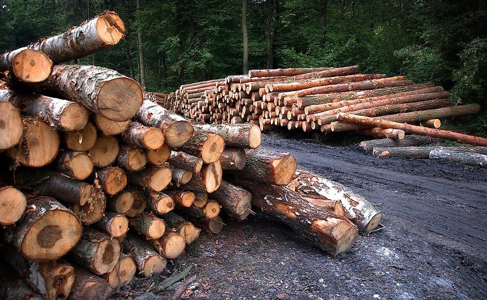 Des travaux d'aménagement forestiers dans Charlevoix et le Bas-Saguenay
