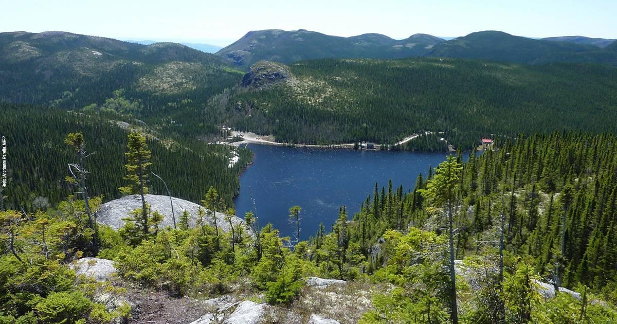 Gestion et aménagement des forêts: Québec lance une consultation publique