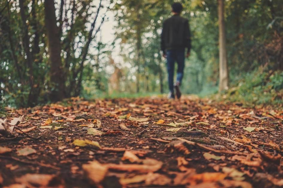 Cet automne, laissez des feuilles mortes faire leur travail !