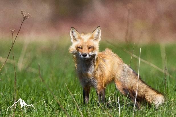 La photographie de la vie sauvage est presque identique à la chasse