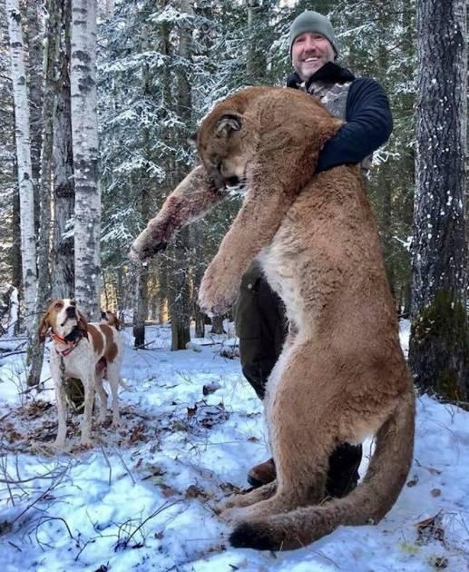 Un animateur canadien crée la polémique en tuant un puma