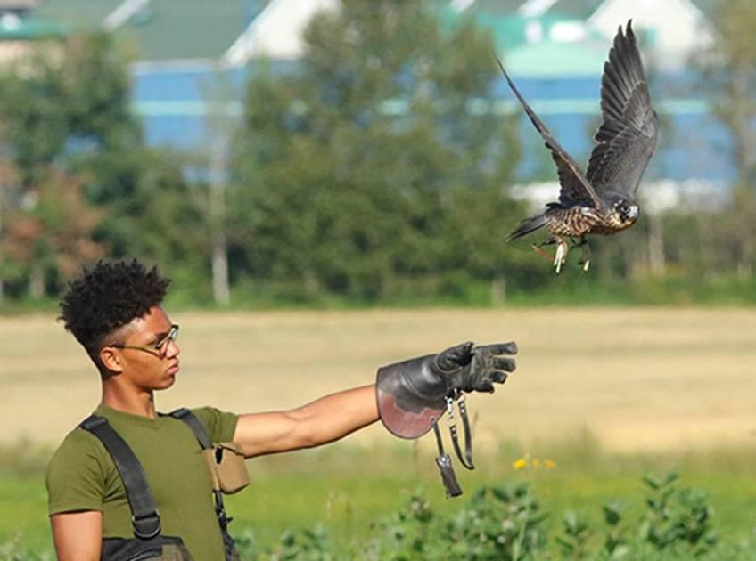 La Fauconnerie: l'art de la chasse au vol
