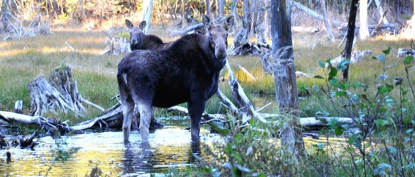 Les «50 ans et mieux» formés sur la chasse et la gestion de la faune