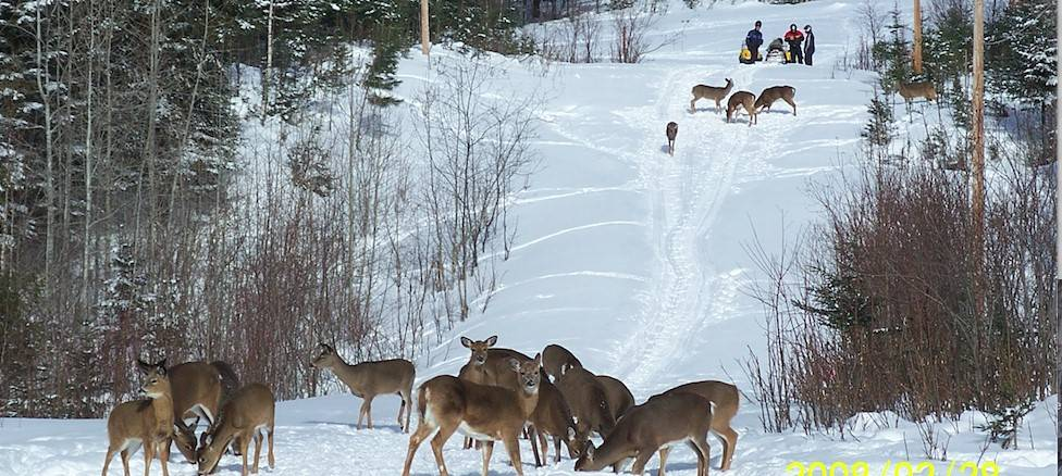 Un guide expérimenté s'inquiète de la situation du cerf dans la Zone 2 Est
