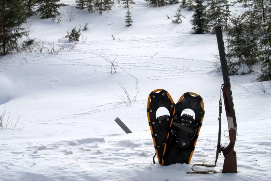 Le kit de départ du chasseur pour la récolte de lagopèdes