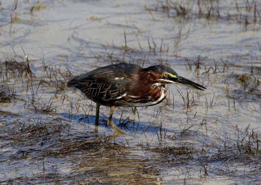 Une aire de conservation des milieux humides agrandie près de Sorel