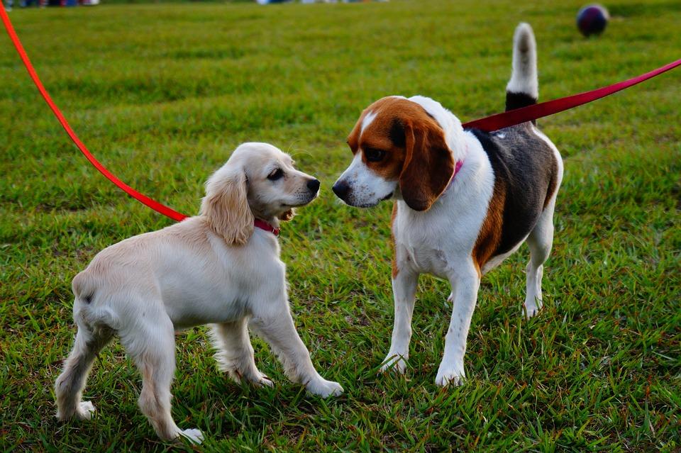 Les chiens autorisés dans les parcs nationaux d'Aiguebelle et du Lac-Témiscouata