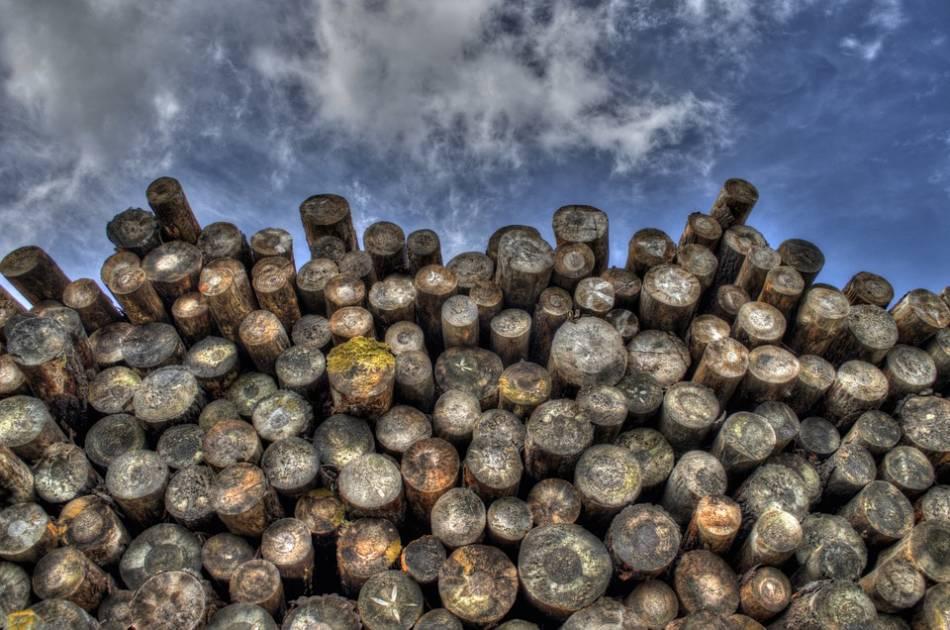 Consultation sur les plans d'aménagement forestier au Saguenay-Lac-Saint-Jean