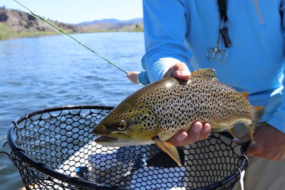 Les ventes de permis de pêche continuent de chuter au Québec