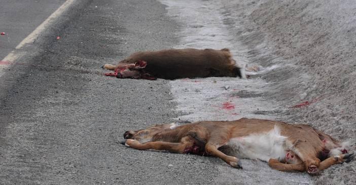 Diviser la zone de chasse 1 pour diminuer les cerfs et sauver des vies